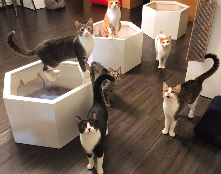 Cafe with Cats in New York City